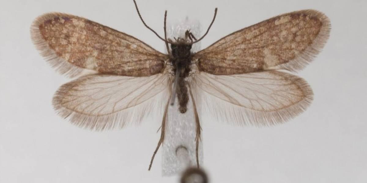 Cómo eran las mariposas hace 200 millones de años, cuando aún no existían las flores