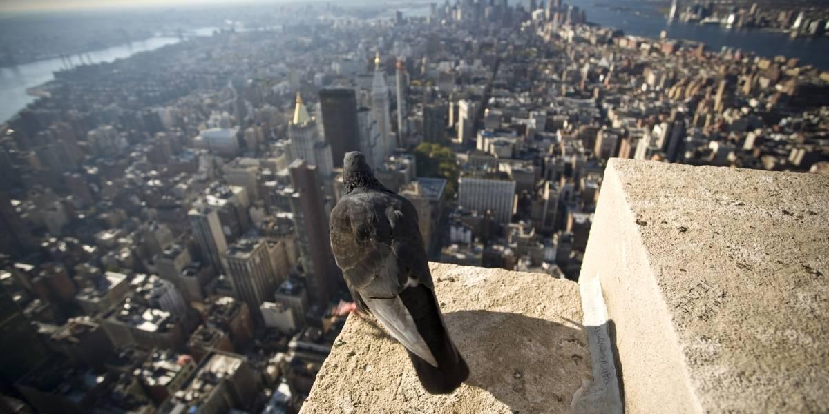Humanos están causando la evolución de especies en las ciudades