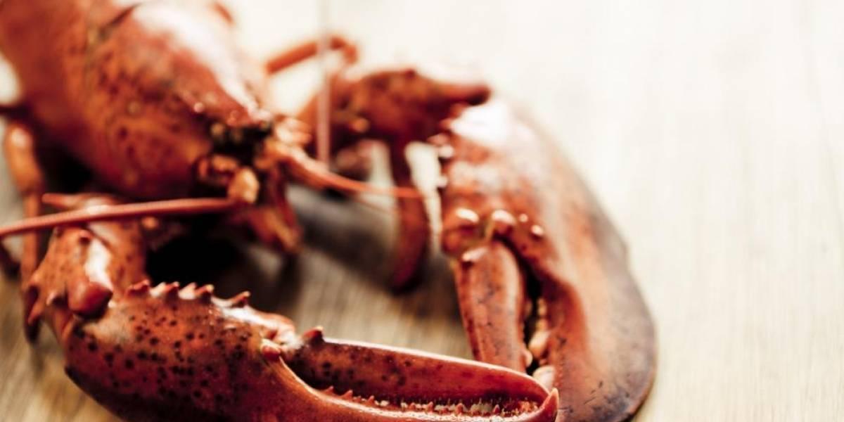 A partir de marzo, cocinar langostas vivas queda prohibido en Suiza