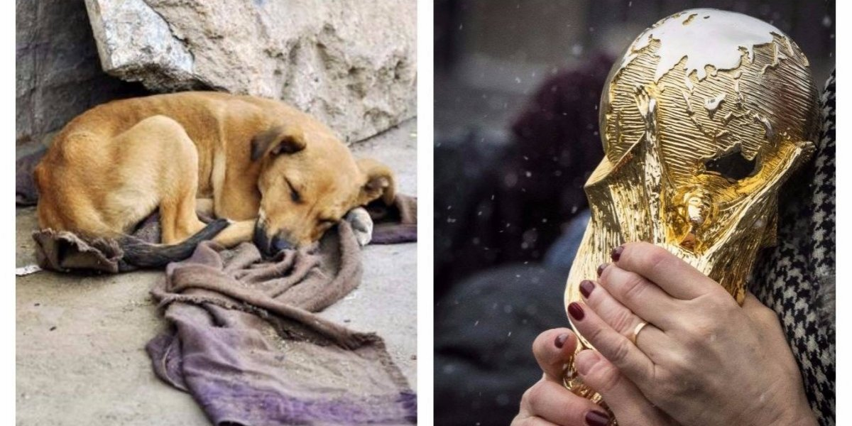 Denuncian matanza de animales callejeros previo al Mundial — Polémica en Rusia