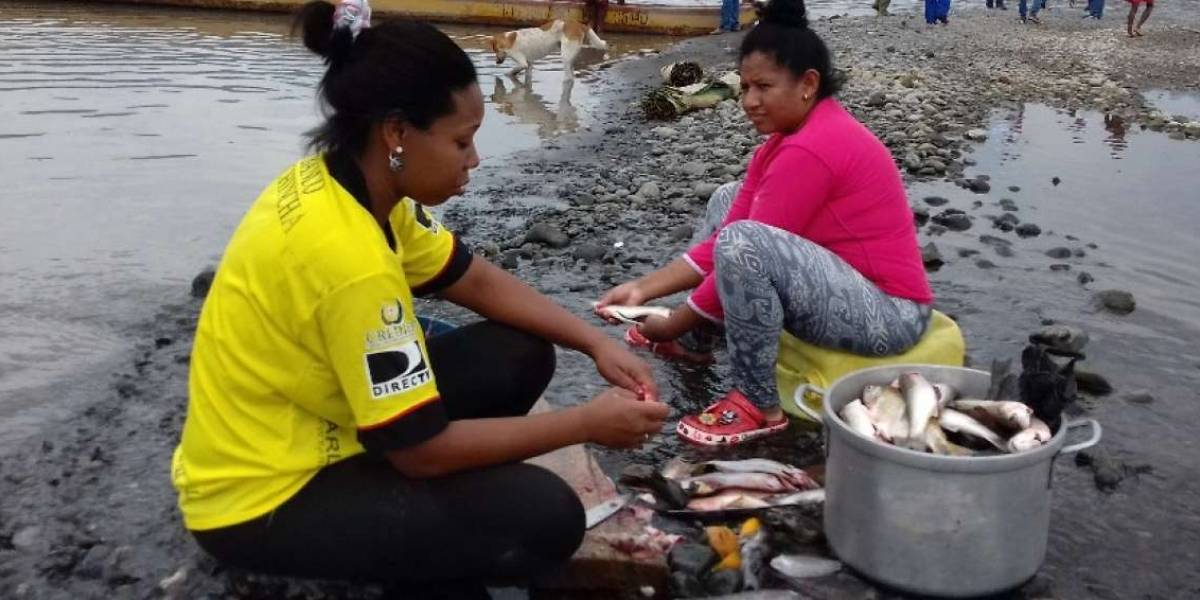 Peces aparecen muertos en Esmeraldas por contaminación