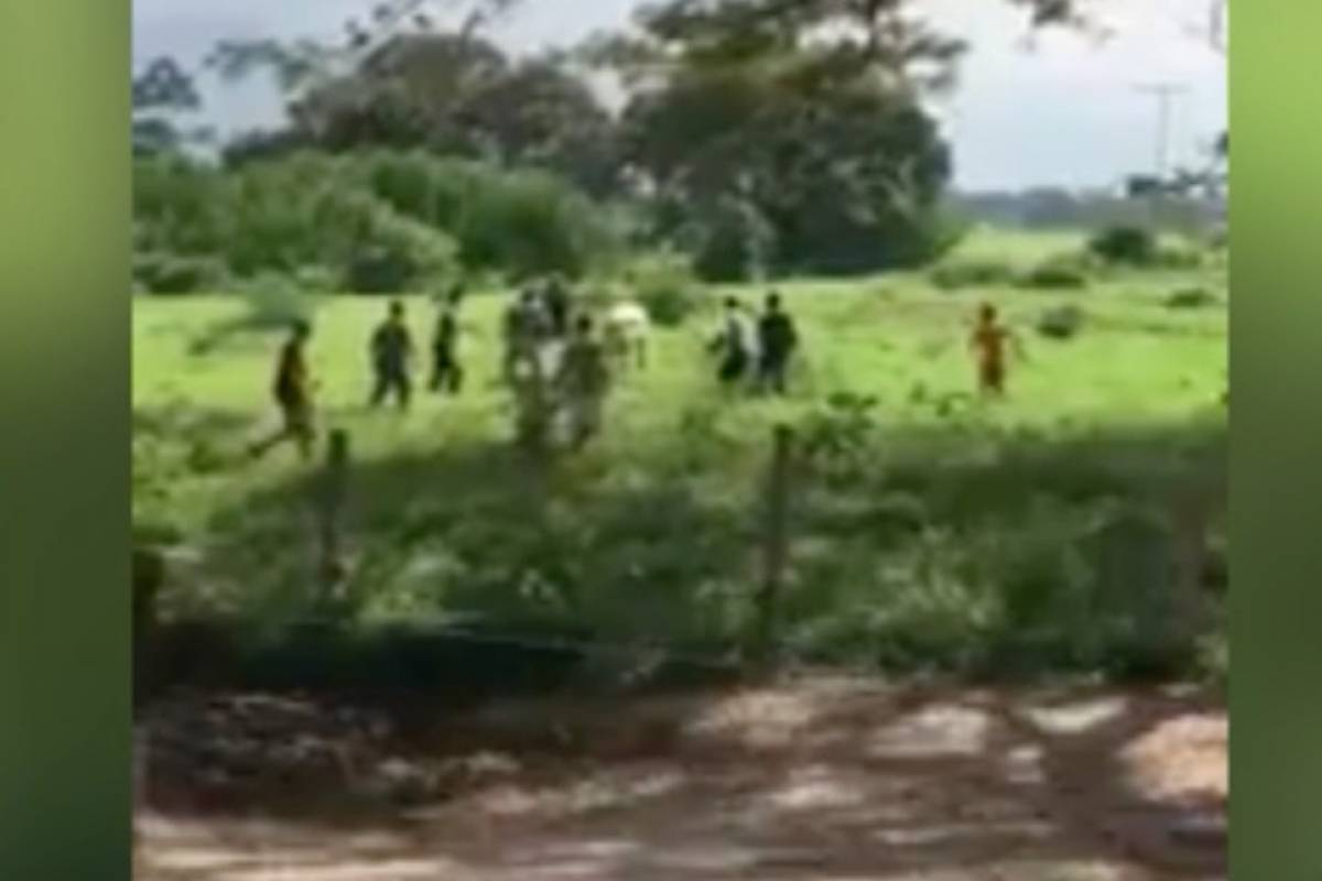 Saquean una hacienda y matan reses, denuncia diputado opositor