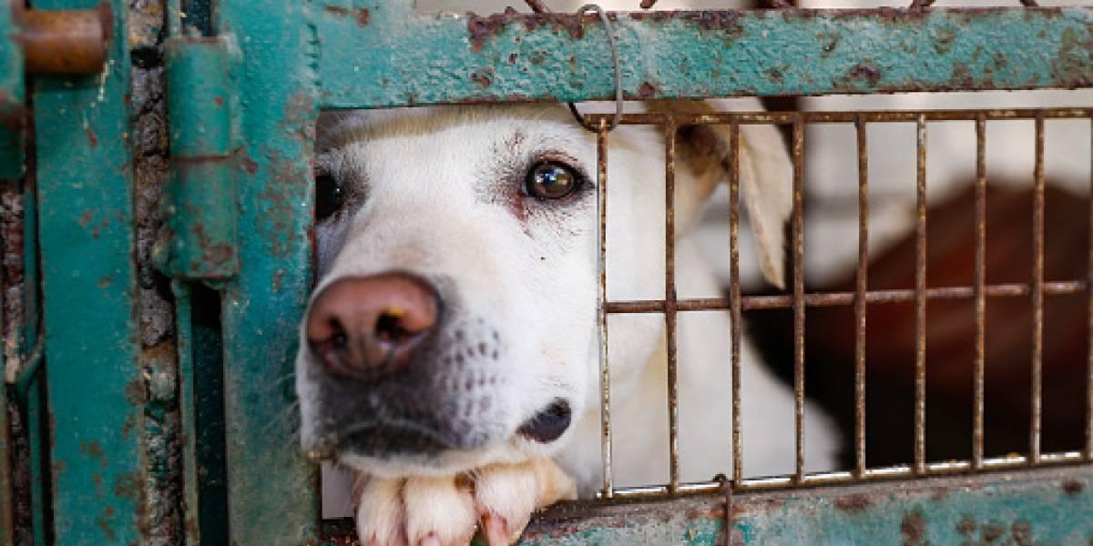¡Crueldad! Matan a perros callejeros por el Mundial de Rusia 2018