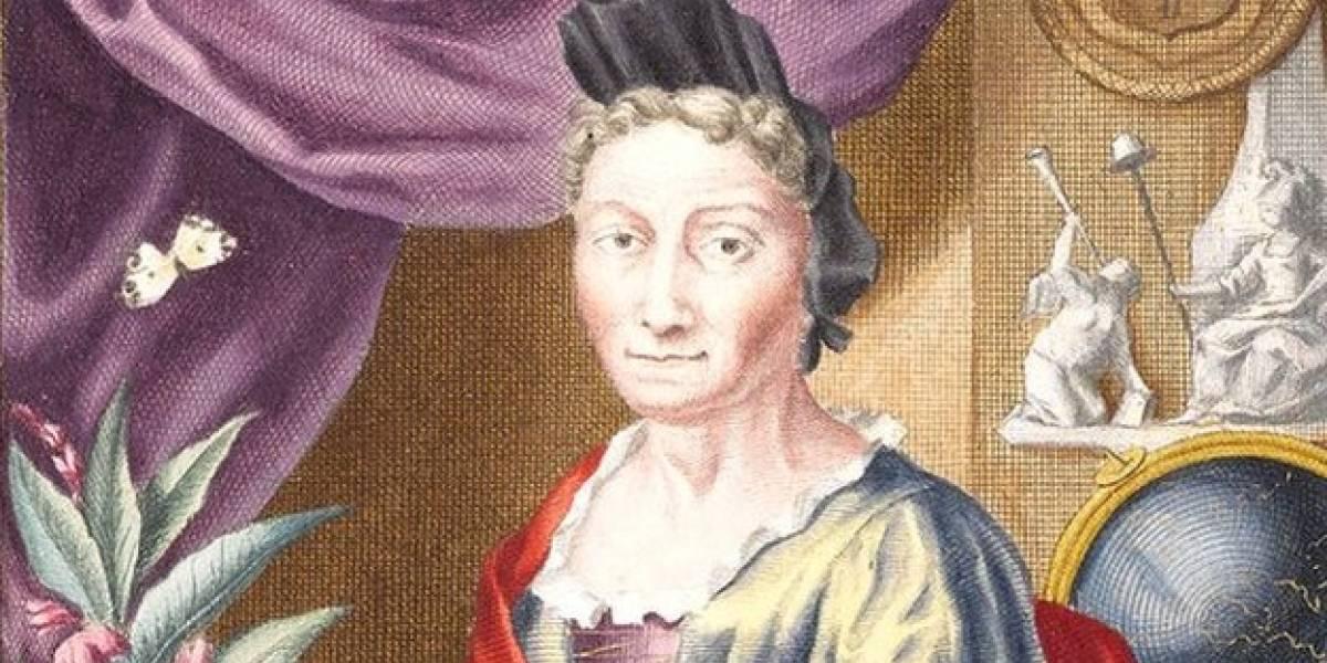 A mulher que descobriu a metamorfose e se embrenhou de espartilho na Amazônia no século 17