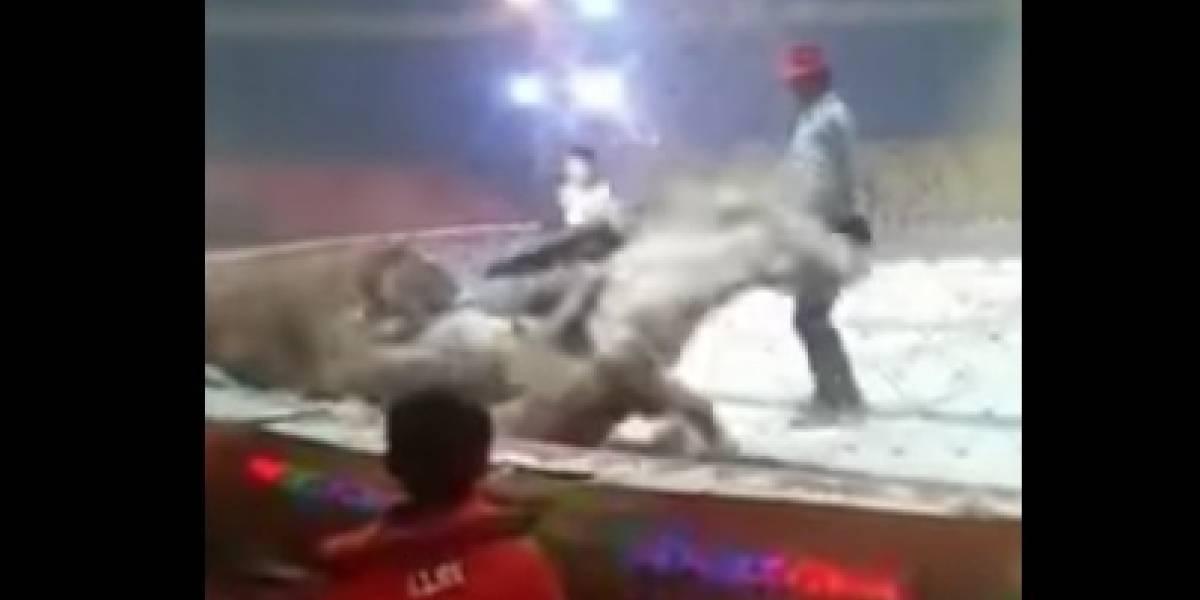 Tigre y leona atacan a caballo en función de circo chino