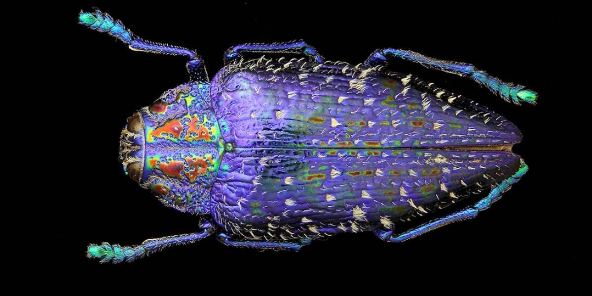 Italiano retrata a beleza dos insetos em série fotográfica cheia de cores
