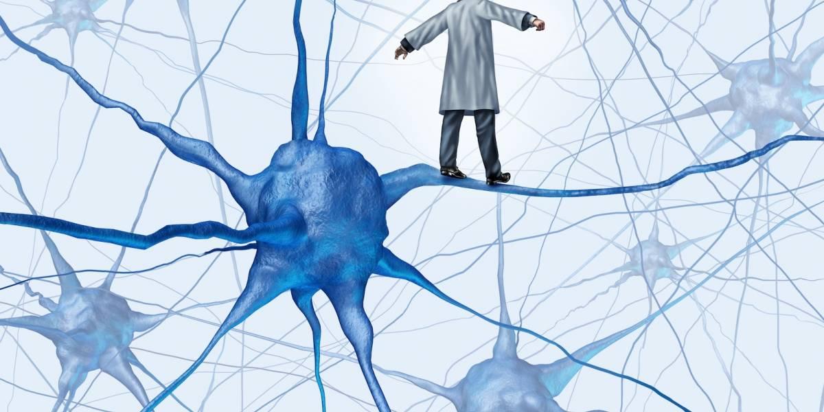 """Hallan """"reserva"""" de neuronas jóvenes que previenen el envejecimiento"""