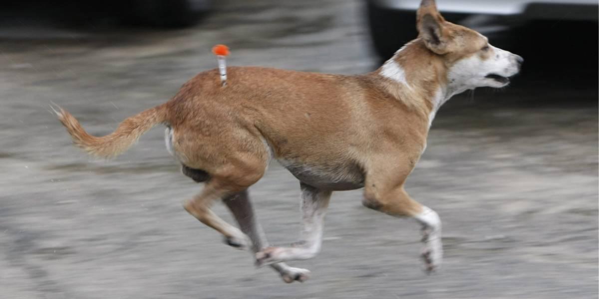 De 11 puñaladas asesinaron a perrita callejera en Cartagena