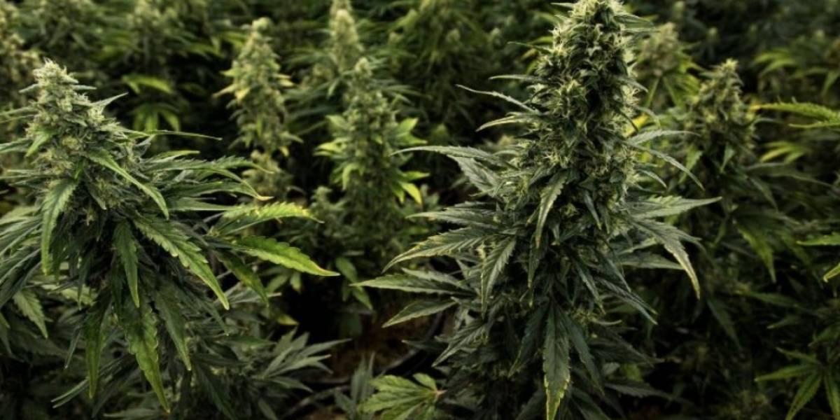 Asaltan clínica de cannabis medicinal en Barceloneta