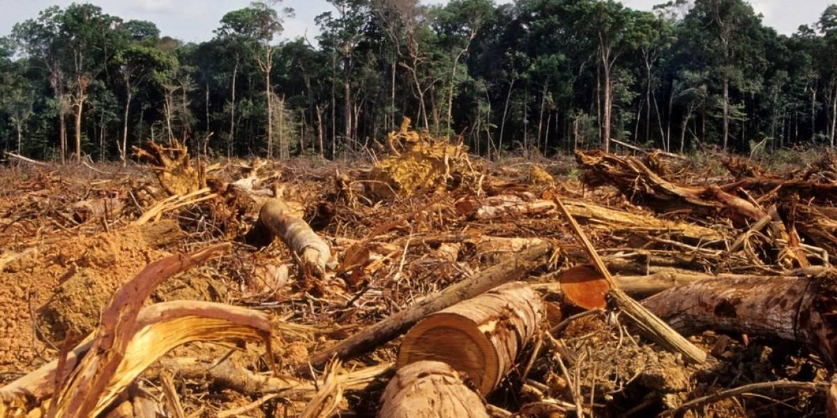 Fortalecimento da bancada ruralista com crise política deixa Amazônia vulnerável, diz Financial Times