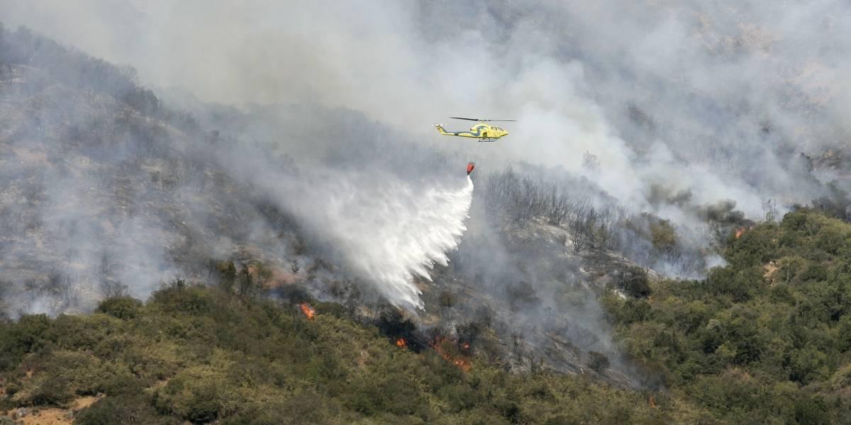 Organizaciones medioambientales buscan evitar que la catástrofe forestal de los incendios se repita