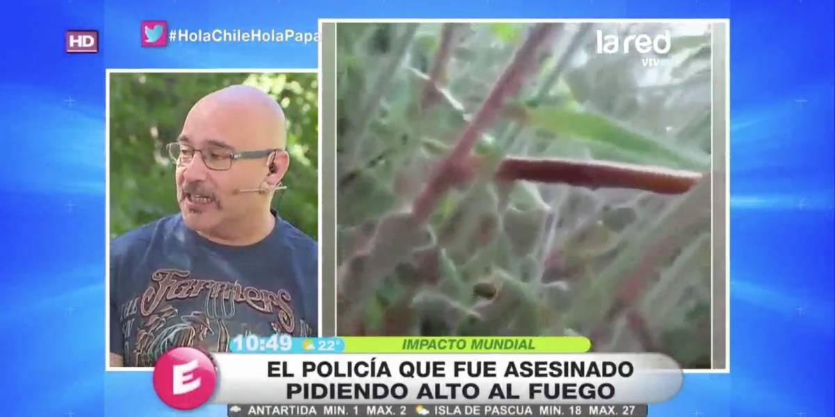 """""""Hola Chile"""" de La Red consigue inesperado peak de rating y estuvo cerca de Mega"""