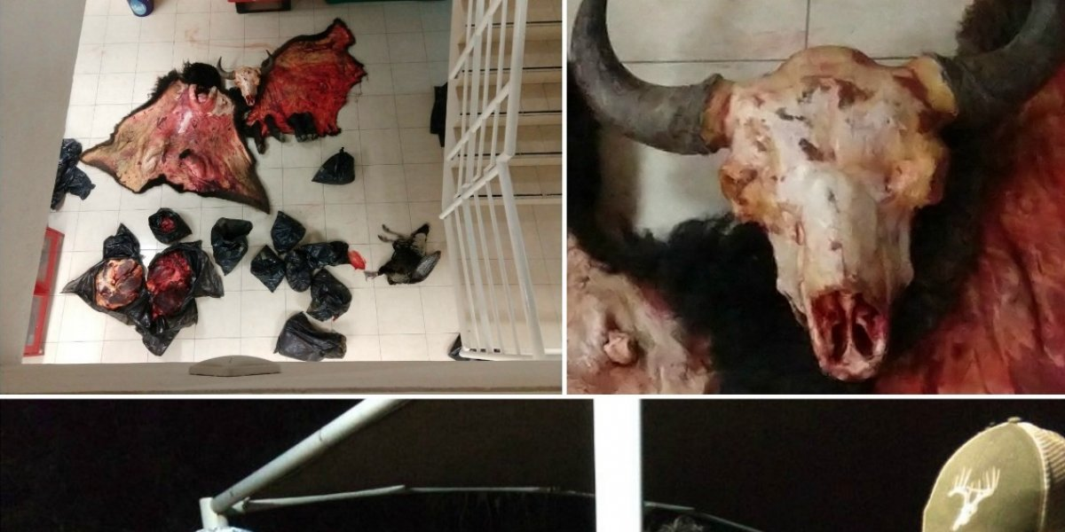 Caen dos en Aguascalientes por traficar con carne y piel de bisonte