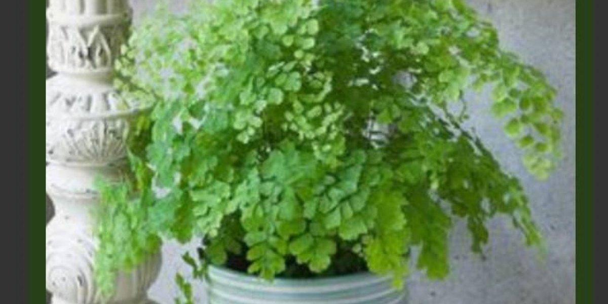 Mujer deja antes de morir de tarea a su esposo regar sus plantas