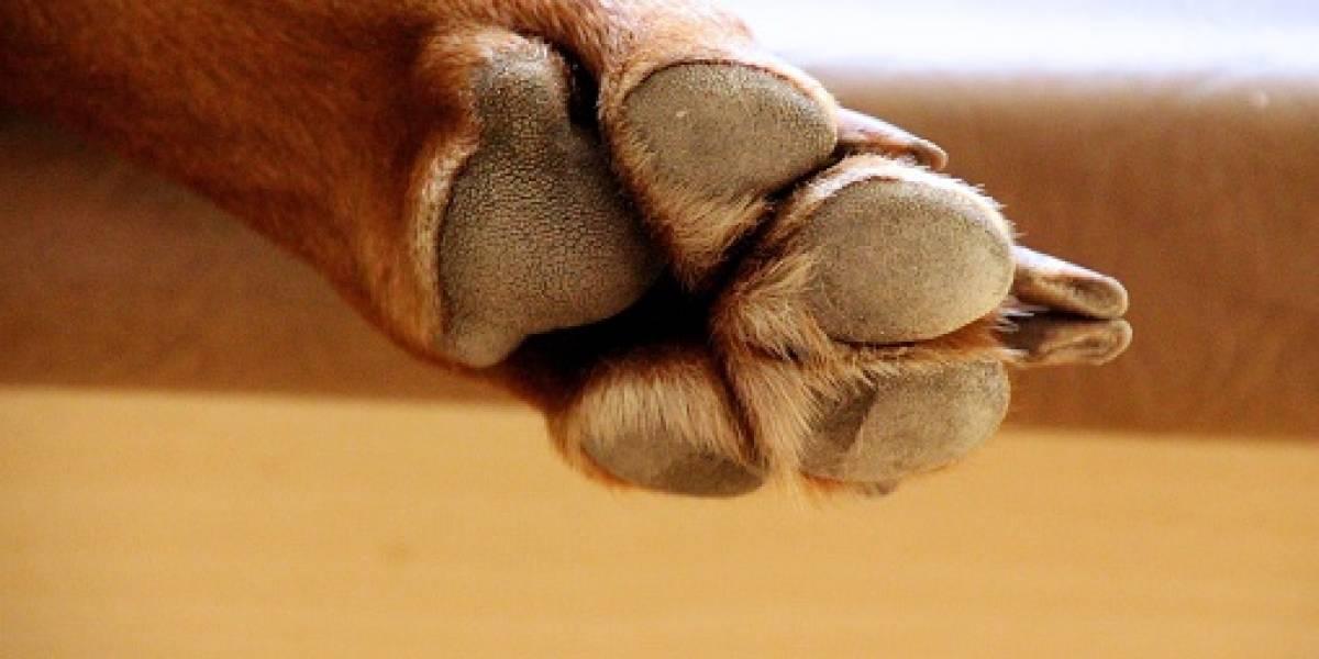 Policía Nacional abre inscripciones para cursos de adiestramiento canino