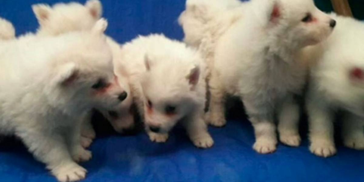 Mujer denuncia que veterinaria tiene a sus mascotas retenidas por no pagar injusta cuenta