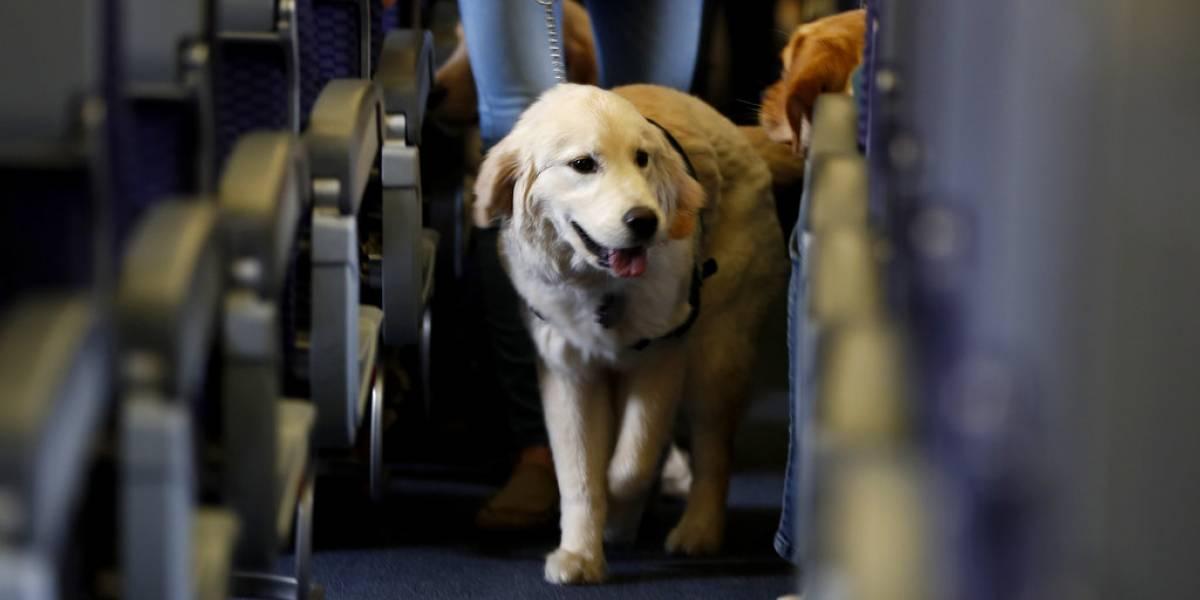 Delta pedirá declaración jurada sobre conducta de perros antes de abordar