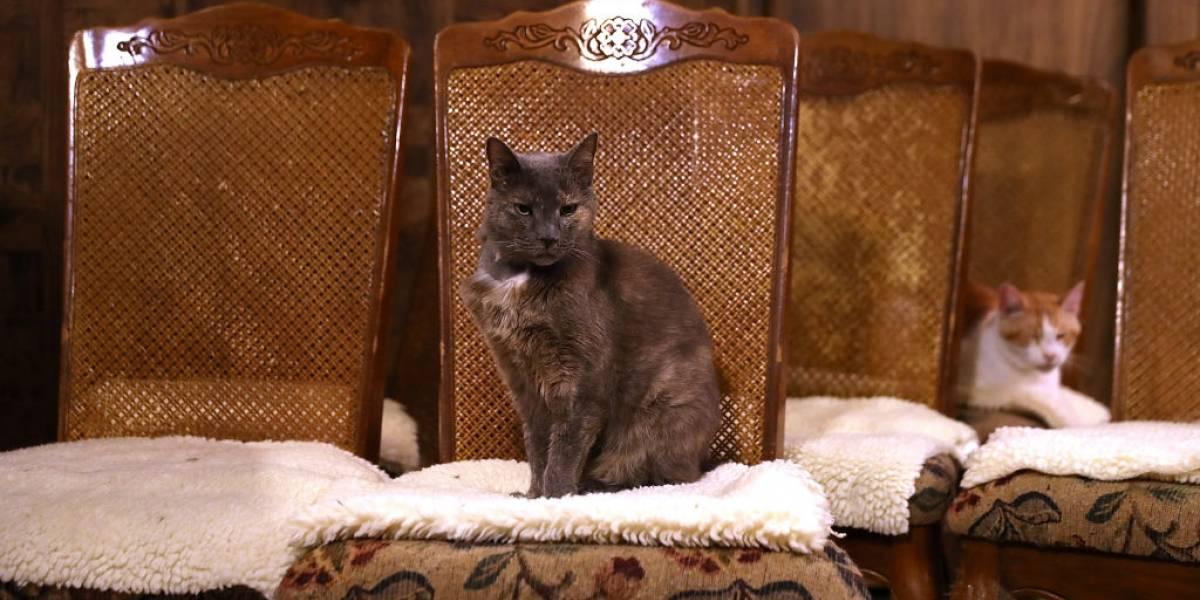 ¡Increíble pero cierto! Gato heredó 30 mil euros tras la muerte de su dueña
