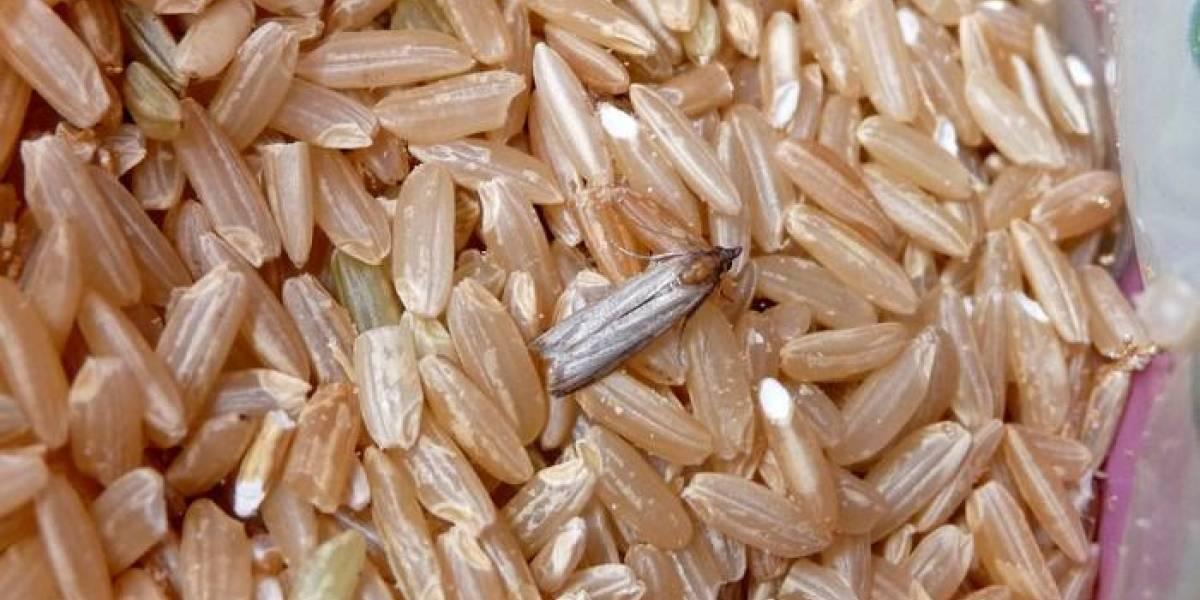 Polillas y larvas en los alimentos: ¿Cómo combatir esta plaga de verano?