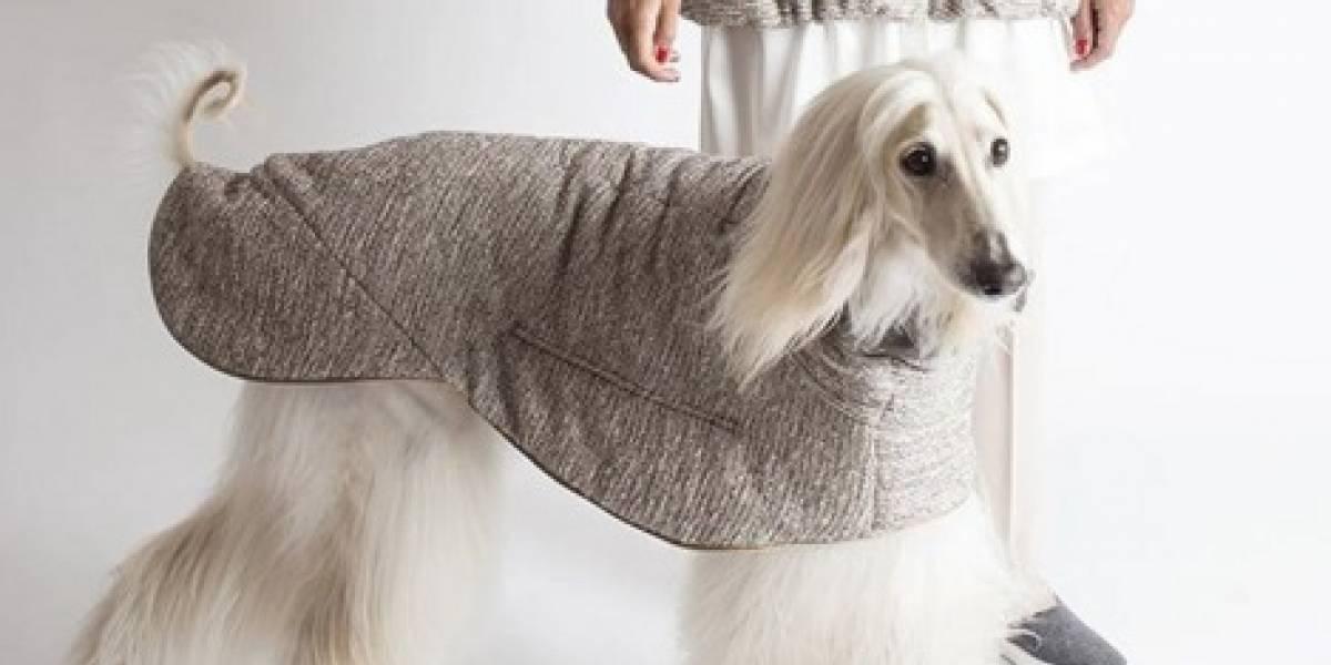 Grife lança roupas que podem ser usadas por mulheres e cachorros