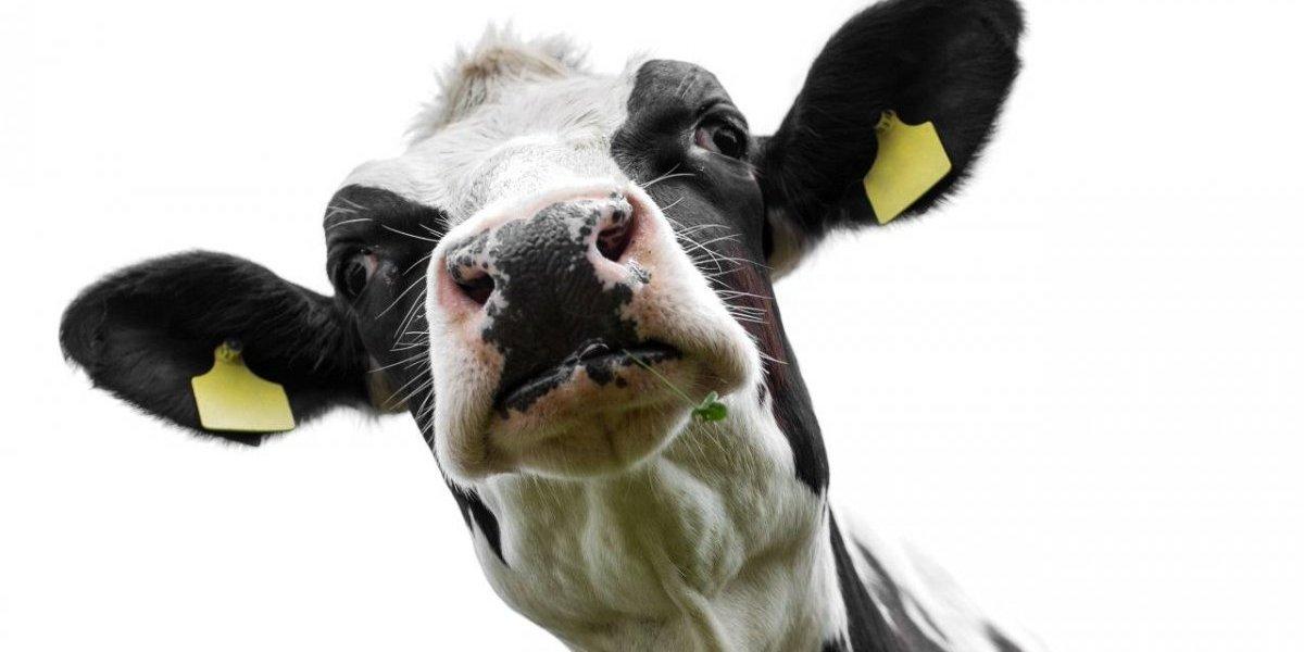"""La """"terapia de la vaca"""" ¿la nueva iniciativa para presos en la India?"""