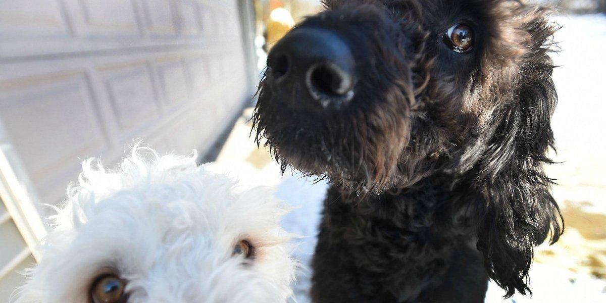 Llevaba horas en la nieve cubierta sólo con una bata de dormir: Dos perritos salvan a una anciana de morir congelada en EEUU
