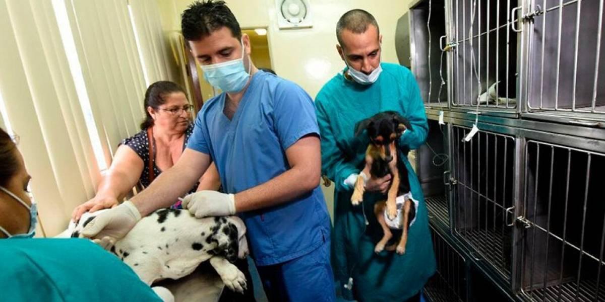 Clínica móvil de esterilización veterinaria gratuita llega a la Martha de Roldós
