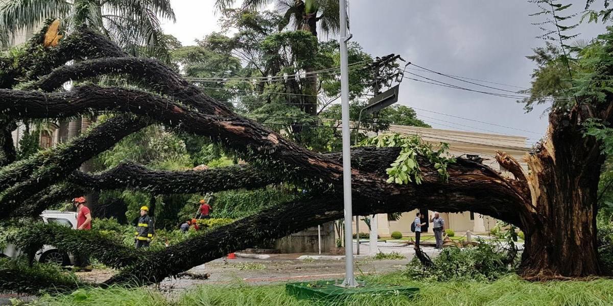 Após fortes chuvas, São Paulo registra 14 quedas de árvores