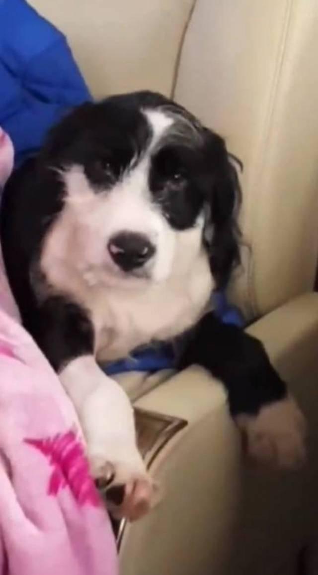 Cachorro de anitta cantora desfrutando viagem em jatinho Foto: Instagram / @anitta