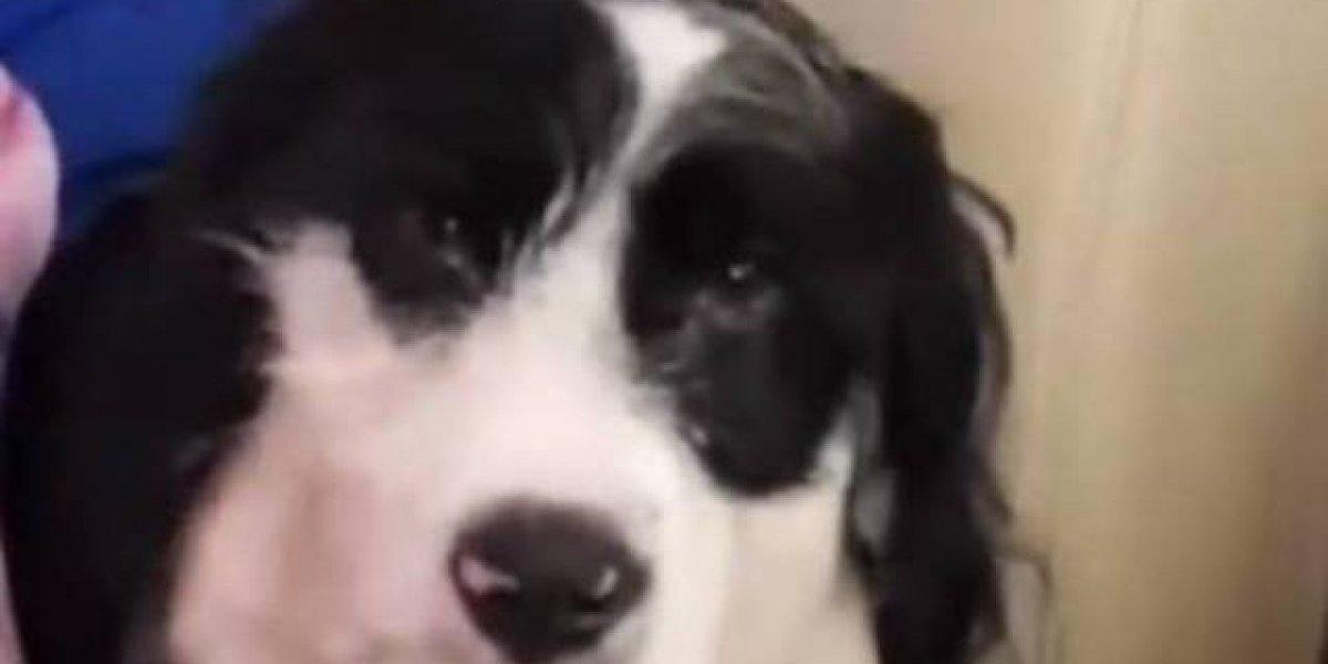 Cachorro de Anitta tem poltrona própria em jatinho