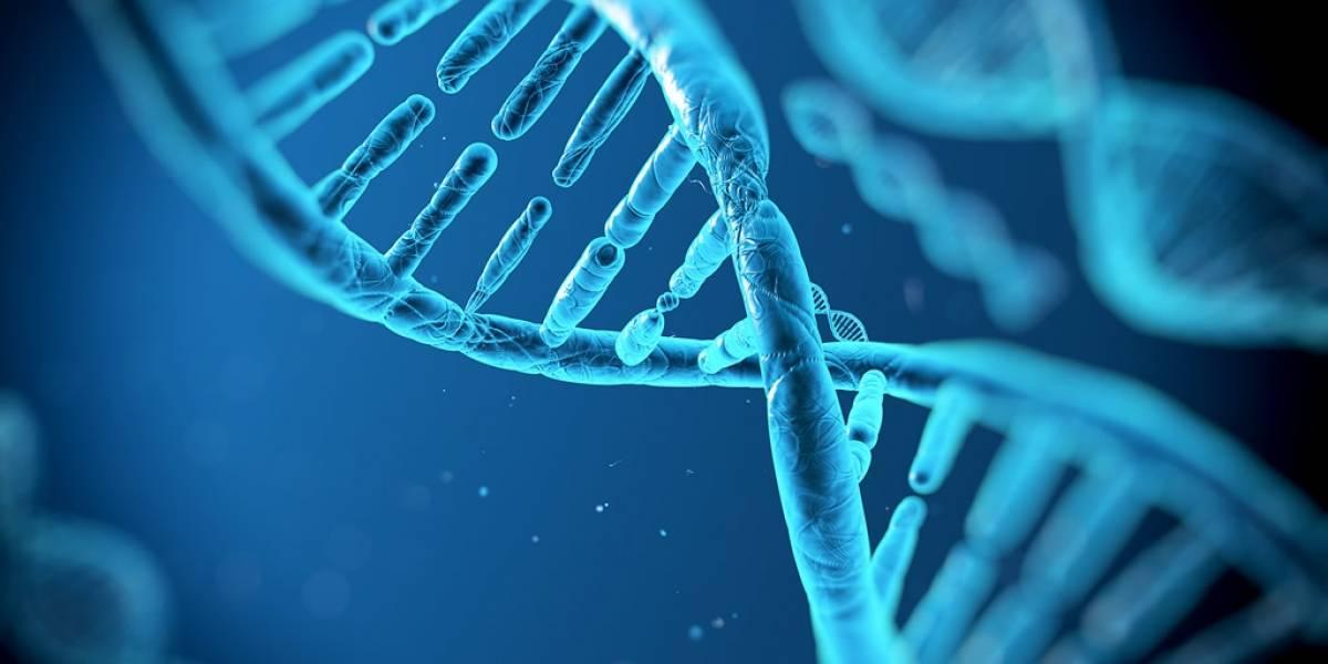 Es posible construir un ordenador basado en nuestro código genético