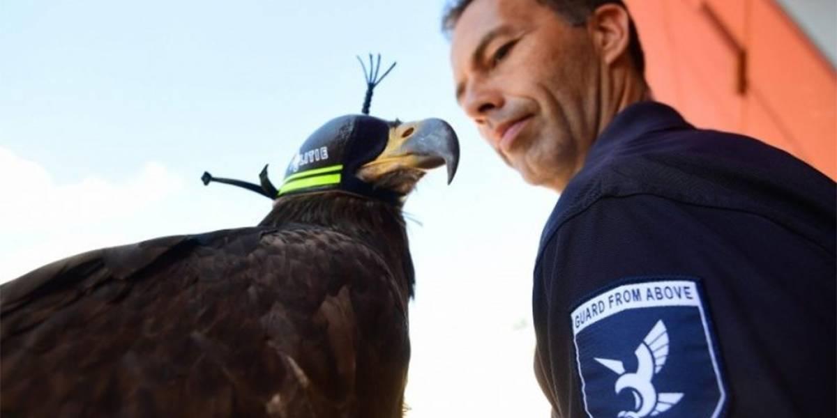 Policía de Holanda ya utiliza águilas para atrapar drones