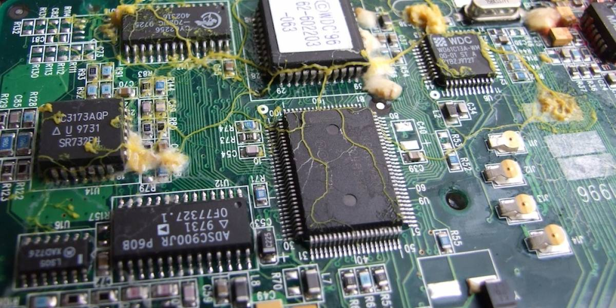 Ordenadores hechos de moho, chips biológicos y el futuro de la informática