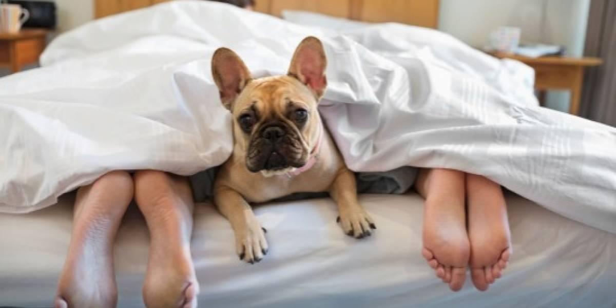 ¿Cómo hacer que tu perro duerma en su cama?