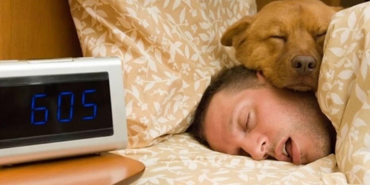 ¿Por qué los perros dan vueltas en círculo antes de dormir?