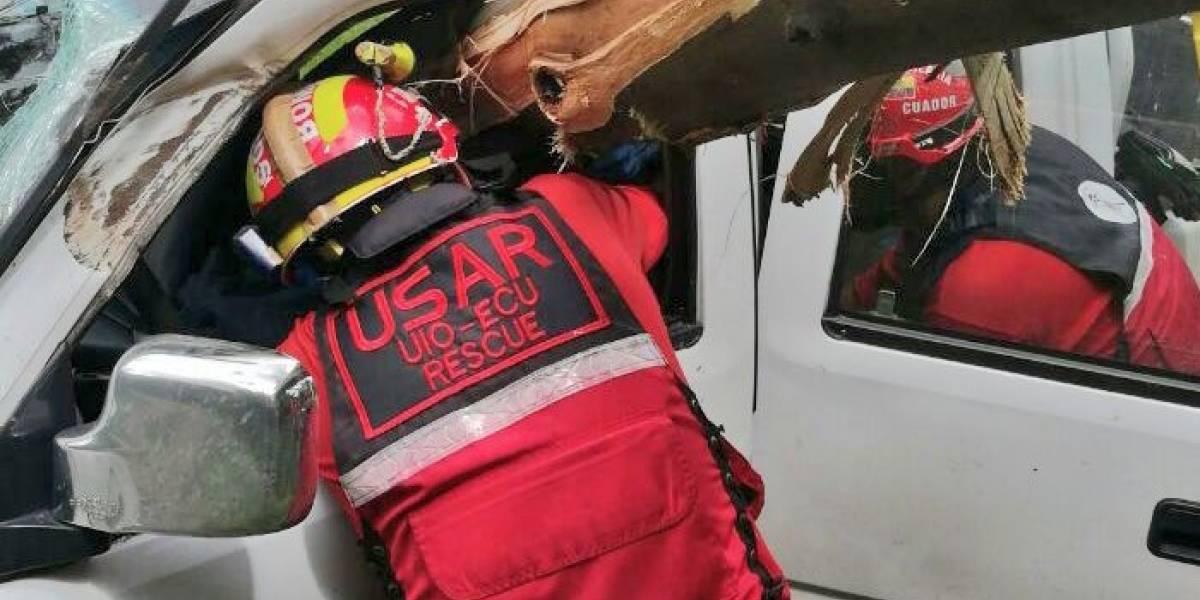 Árbol cayó y dejó tres heridos en Quito