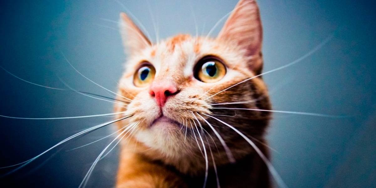 Científicos comprueban paradoja del gato de Schrödinger con Rayos X