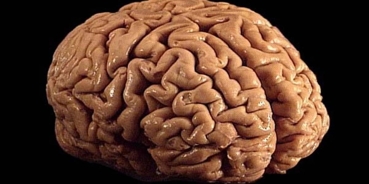 Logran replicar levemente el funcionamiento del cerebro en máquinas