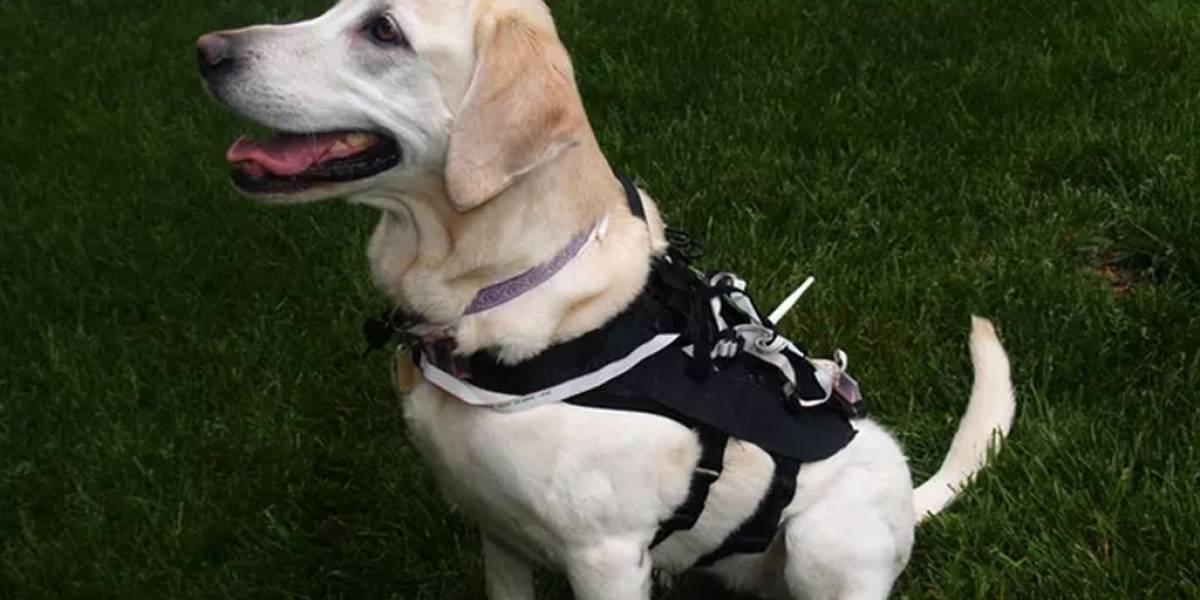 Este chaleco inteligente puede entrenar automáticamente a tu perro