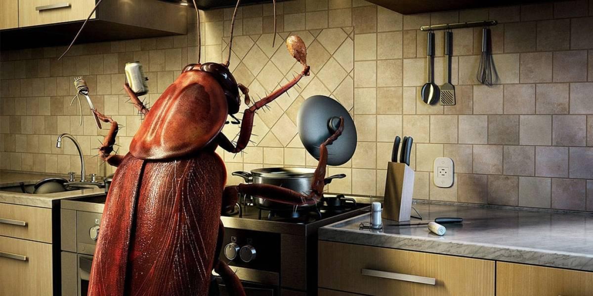 Científicos concluyen que la leche de cucaracha es buena para humanos