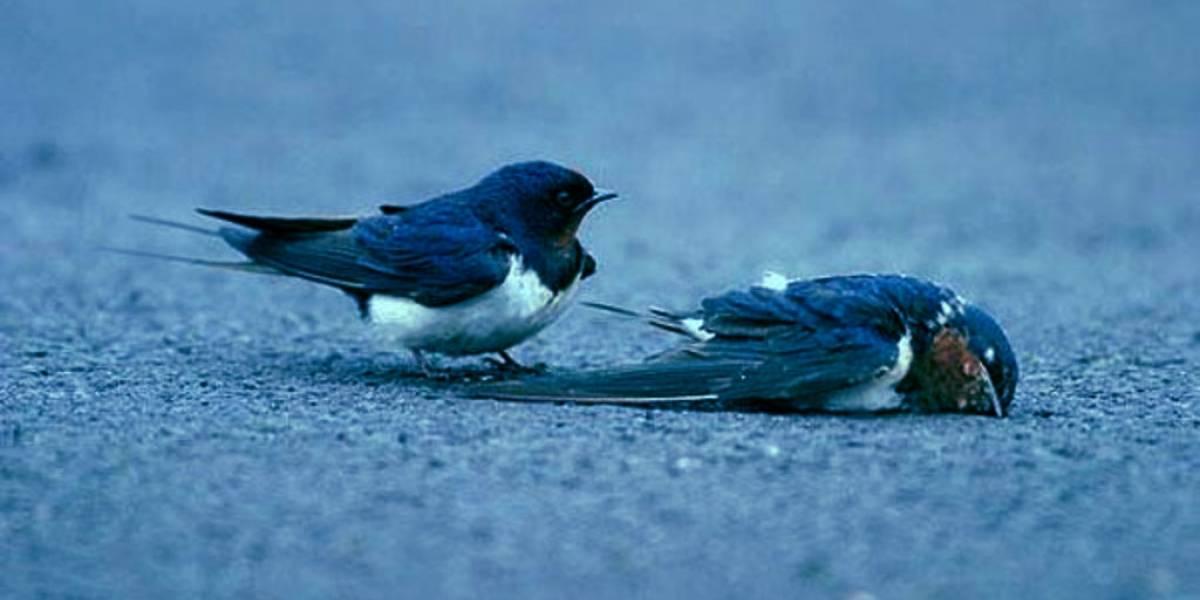 Twitter lanzará nueva herramienta para publicar esos interminables hilos de tuits