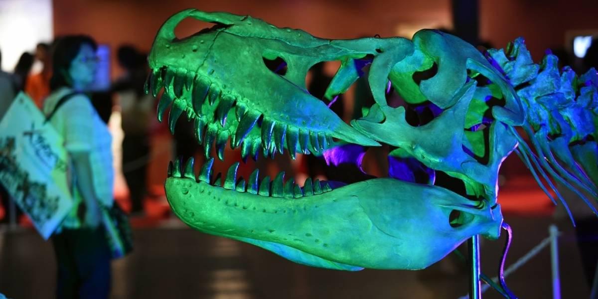Apenas hemos descubierto la mitad de las especies de dinosaurios existentes