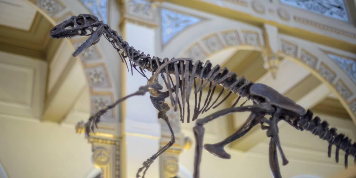Preparan exposición sobre dinosaurios sudamericanos con Realidad Aumentada