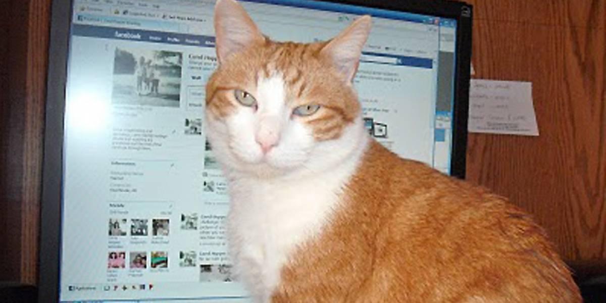 Estudio: El 10% de los usuarios de Facebook no son personas