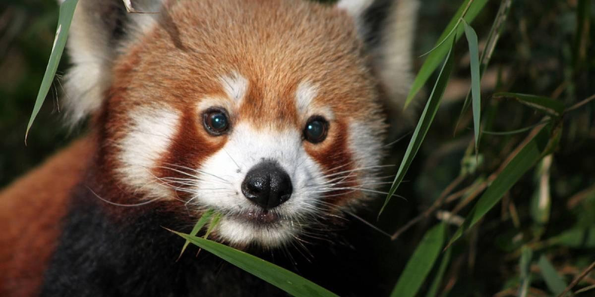 Uso de Firefox cae bajo Internet Explorer y Safari