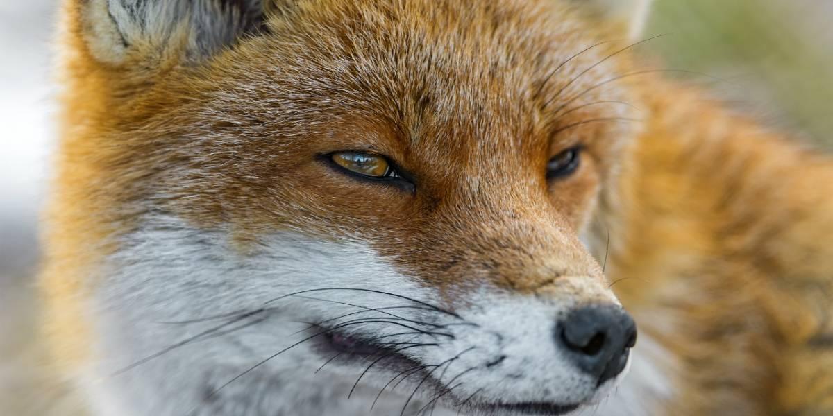 Así sería la futura apariencia de Firefox