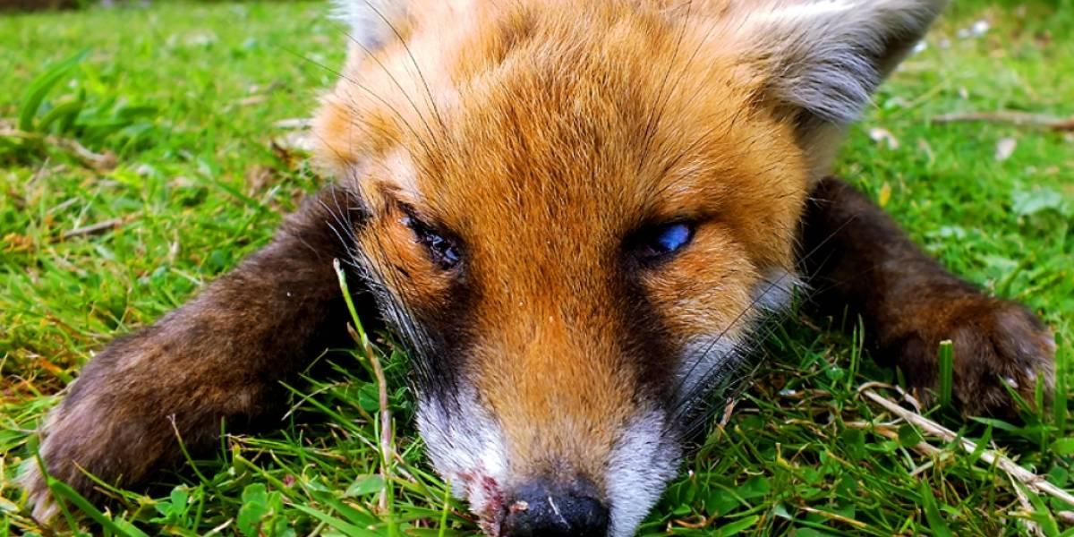 Firefox reiniciaría las preferencias del usuario tras actualizarse