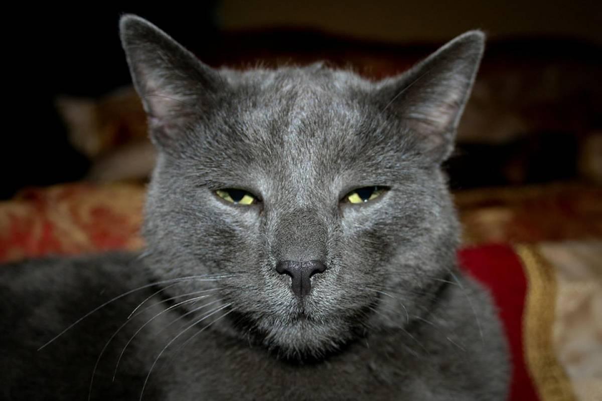 Los gatos son superiores a los perros, afirma estudio evolutivo