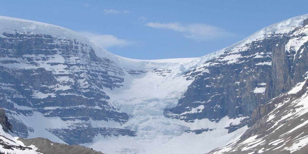 Planta que estuvo congelada bajo un glaciar por cientos de años revivió