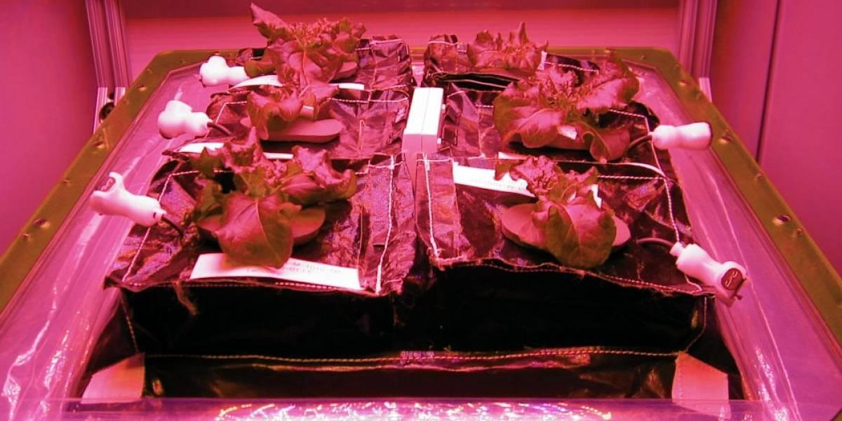 La NASA comenzó a cultivar lechugas en la Estación Espacial Internacional